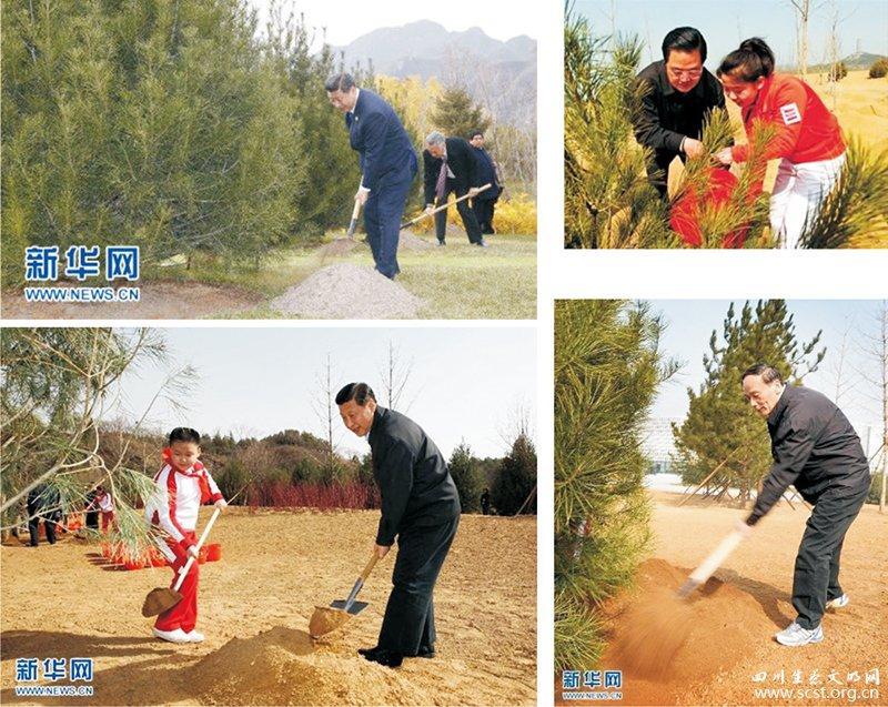 党和国家领导人栽种松树