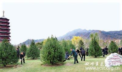 APEC会议亚太伙伴林栽种松树