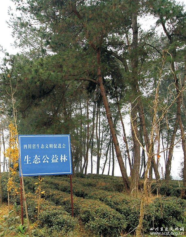 四川省生态文明促进会生态公益林